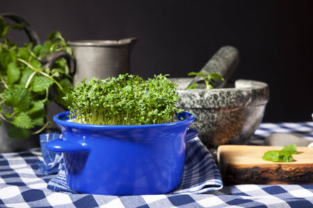 Garden cress plant in blue pot on kitchen table