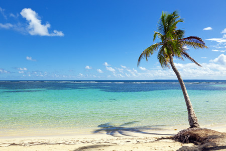 Single coconut palm tree at the beach of La Caravelle, Saint-Anne, Guadeloupe photo
