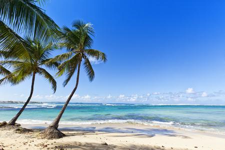 Coconut palms on the Caribbean Sea beach of Le Moule, Guadeloupe