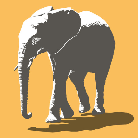 african grey: African Elephant Vector Illustration, two color design