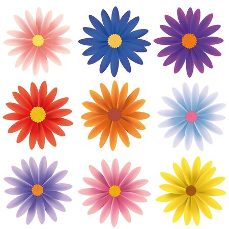 daisy flower: Isolated Vector Flower Collection
