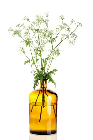 apothecary: Yarrow branches in apothecary bottle isolated on white background