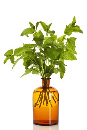 apothecary: Lemon Balm branches in apothecary bottle isolated on white background
