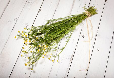 bundled: Bundled chamomile twigs on rustic wooden white background
