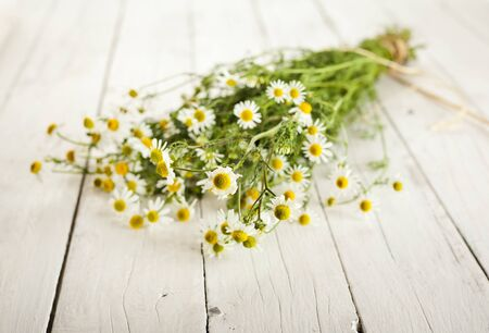 bundled: Bundled chamomile twigs on rustic wooden white background selective focus Stock Photo