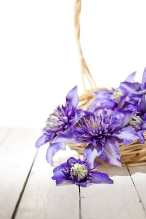 basketful: high key image of a basketful of blue clematis flowers shallow depth of field