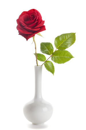 single red rose: Single red rose in a vase isolated on white background Stock Photo