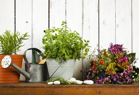 potted plants: still life with potted rosemary and oregano watering can dried flowers rustic background Stock Photo