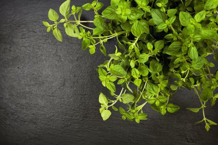 oregano plant on slate background top view with copyspace