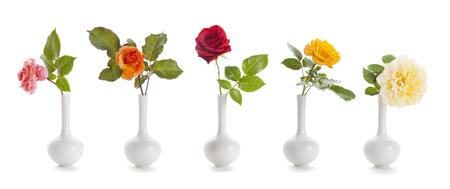 Five roses of different colors in small, vases isolated on white background Stock Photo