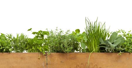 hierbas: Borde decorativo sin fisuras con las hierbas en caja de madera aislado en el fondo blanco
