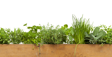 Seamless decorative border with herbs in wooden box isolated on white background Stockfoto