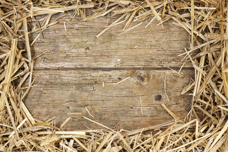 Frame of hay on rustic wooden floor with space for text