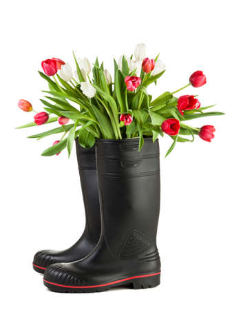 gum boots: Bouquet off white and ruby tulips in black rubber boots isolated on white background