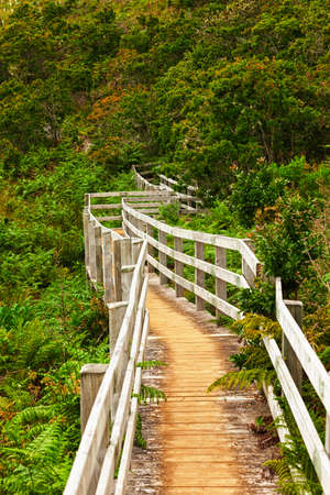 subtropical: Winding wooden path vanishing in a subtropical forest