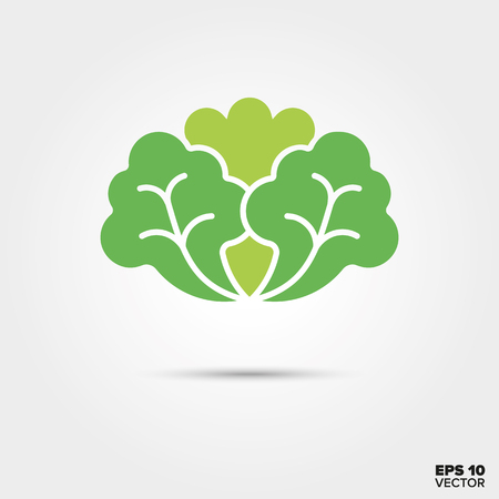 Lettuce vegetable two color vector icon Illustration