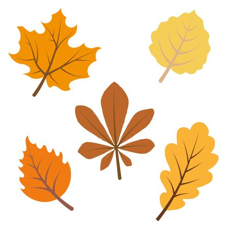 Autumnal leaves sketch collection.
