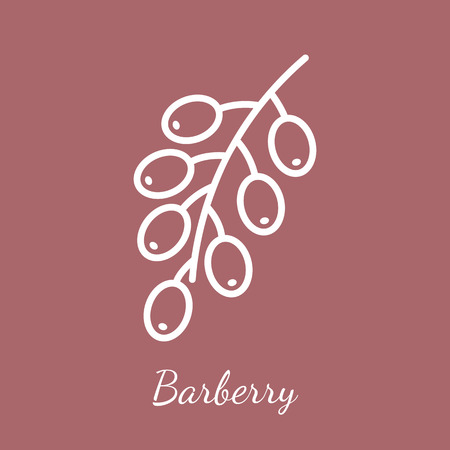 Barberry branch with fruit icon. Aromatic spices vector symbol.