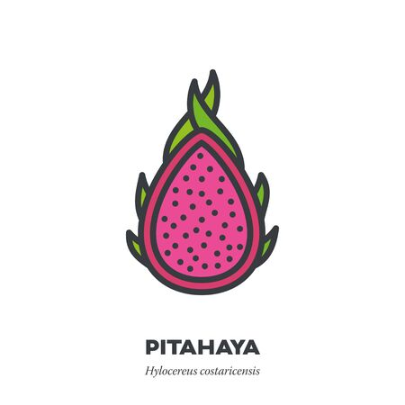 Pitahaya or dragon fruit icon, outline with color fill style vector illustration, cross-section of pink fruit
