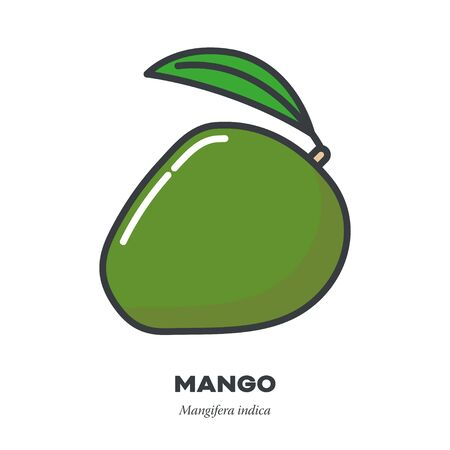 Mango fruit icon, outline with color fill style vector illustration, whole fruit with leaf Illustration