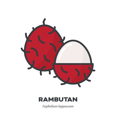 Rambutan fruit icon, outline with color fill style vector illustration, whole and partially peeled fruits