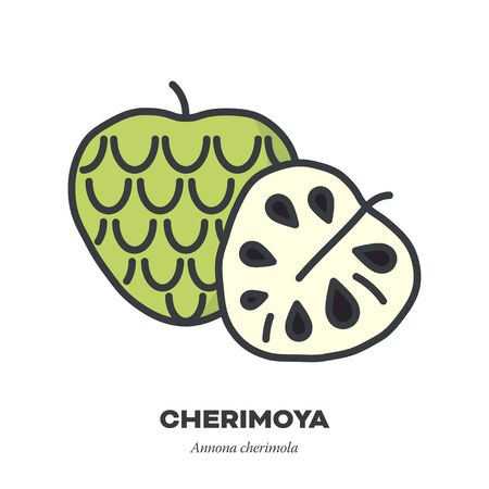 Cherimoya icon, outline with color fill style vector illustration, whole and half custard apple fruit Illustration
