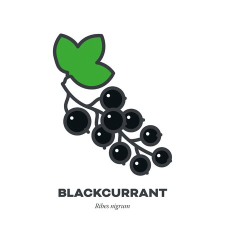 Blackcurrant berry fruit icon, outline with color fill style vector illustration Illustration