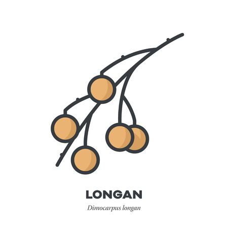 Longan fruit icon, outline with color fill style vector illustration, several fruit on a branch