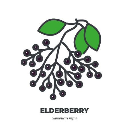 Elderberry fruit icon, outline with color fill style vector illustration, fruit cluster and leaves Illustration