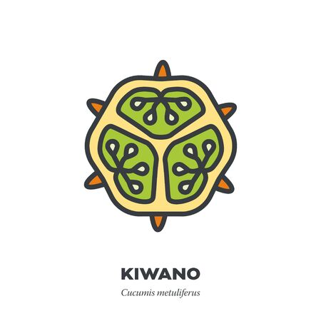 Kiwano or horned melon fruit icon, outline with color fill style vector illustration, cross-section Illustration