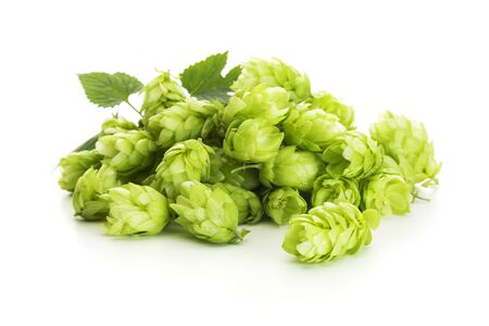 Heap of fresh common hops cones (Humulus lupulus) isolated on white background Foto de archivo - 130503956