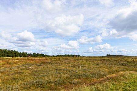 Heath landscape on the North Sea island of Rømø, Denmark