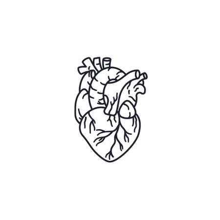 Human heart vector line icon for Heart Day on September 29
