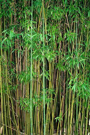 bamboo Фото со стока