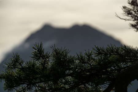 Blurry mountain silhouette with pine branch in foreground Stock fotó