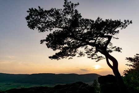 Tree silhouette in front of sunset 版權商用圖片