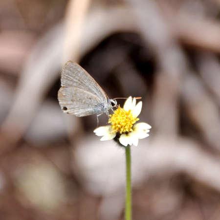 arthropod: A butterfly on a flower