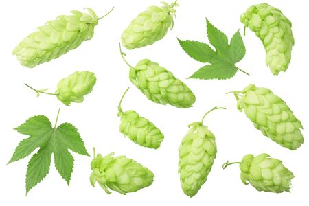 Green hops with green leaves isolated on a white background. top view