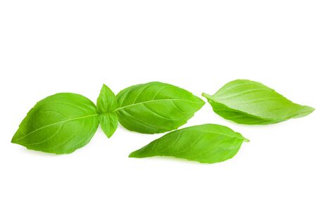 basil leaf isolated on a white background Imagens