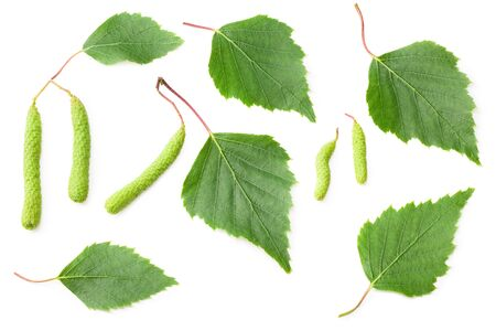 green birch leaves and bud isolated on white background. Top view.