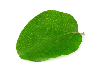 one green apple leaf isolated on white background Imagens
