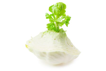 sprout of cabbage isolated on white background