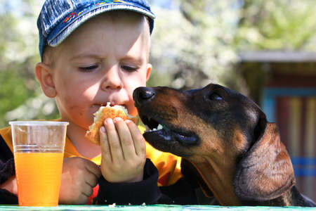 little boy sharing his snack with his dog dachshund