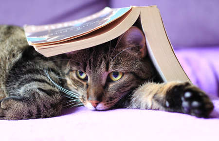 tabby cat reading a book