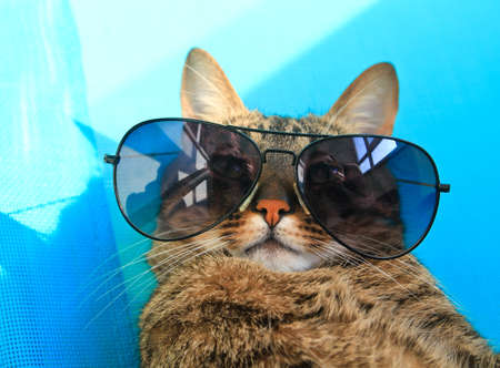 anteojos de sol: gato con gafas de sol