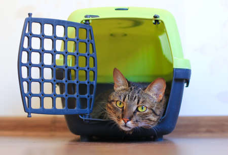 cat carrier: cat in carrier