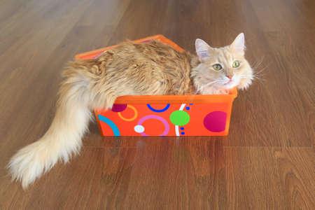 fluffy: gato esponjoso dentro de una caja