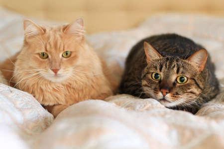 ambush: cat in ambush Stock Photo