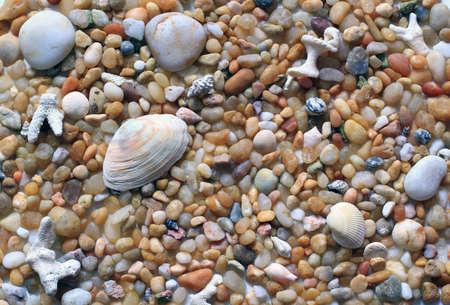 beach pebbles, stones, sea shells background Stock Photo