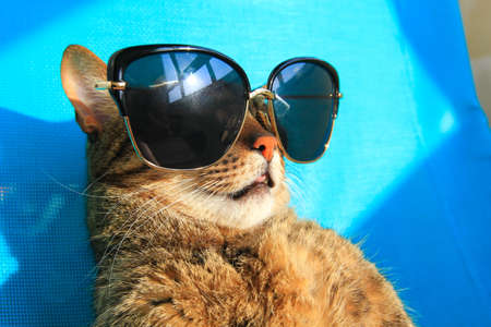 funny cat wearing sunglasses on vacation - summer holidays